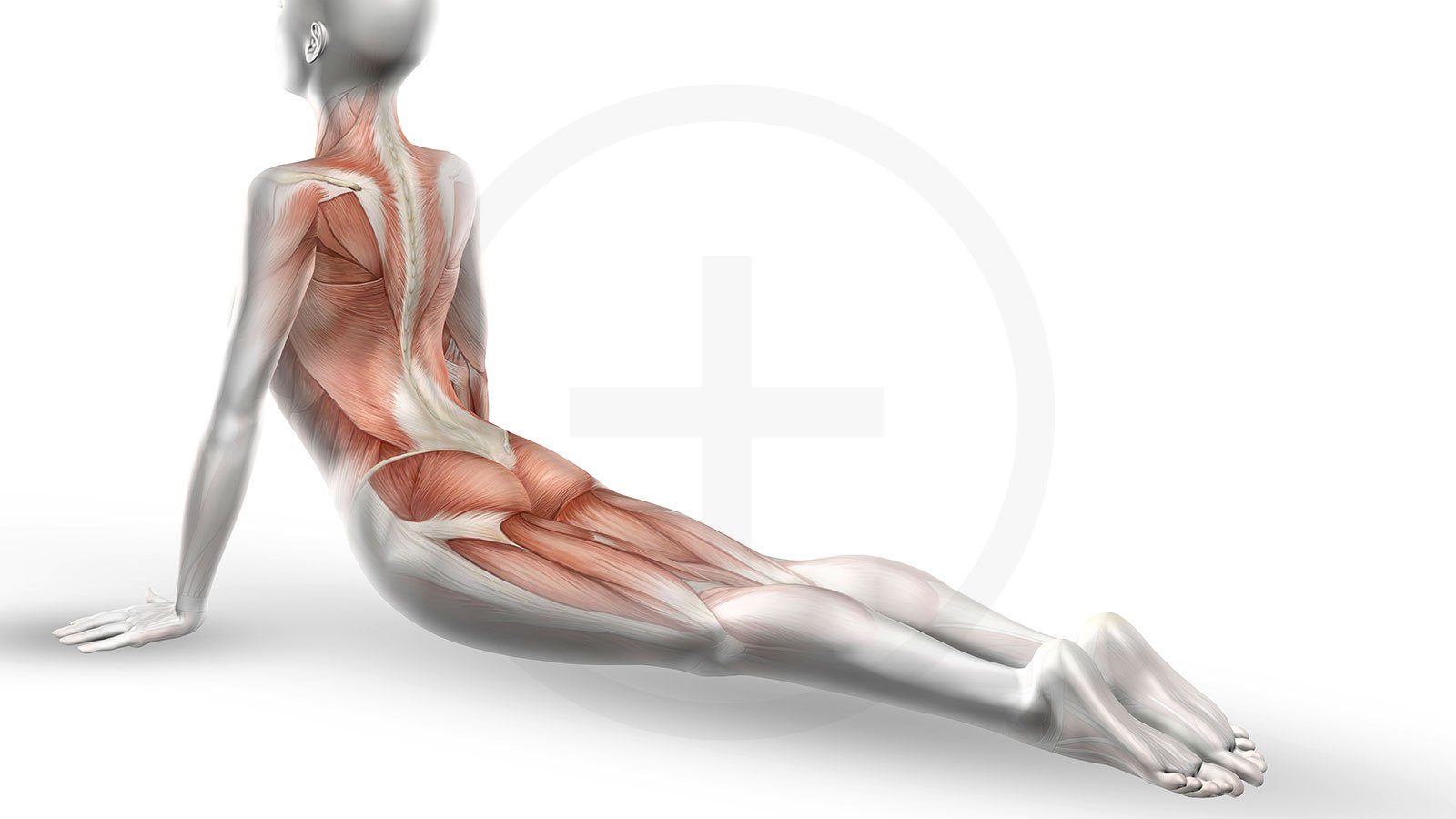 Anatomie der Pilates Bewegung | moveorespiro - Yoga und Pilates in ...