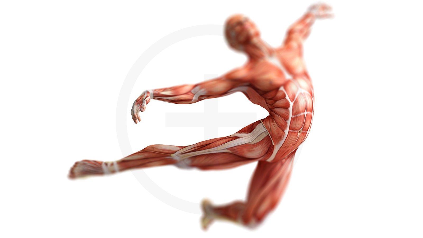 Yoga Therapie – Integrate your Core