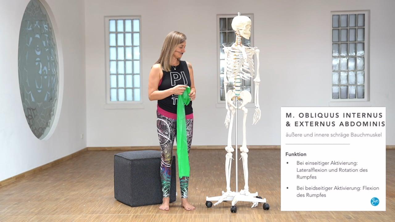 Anatomie 01 Bauch Beckenboden