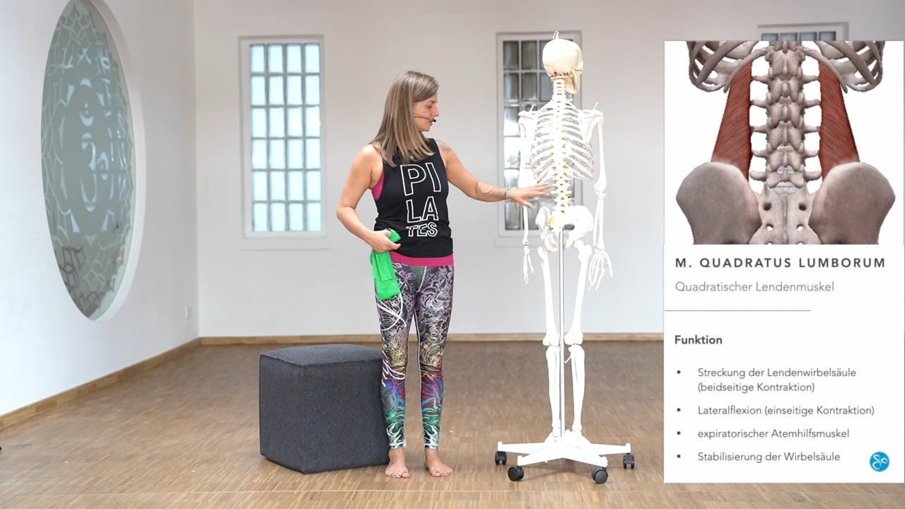Anatomie 02 Rückenmuskulatur
