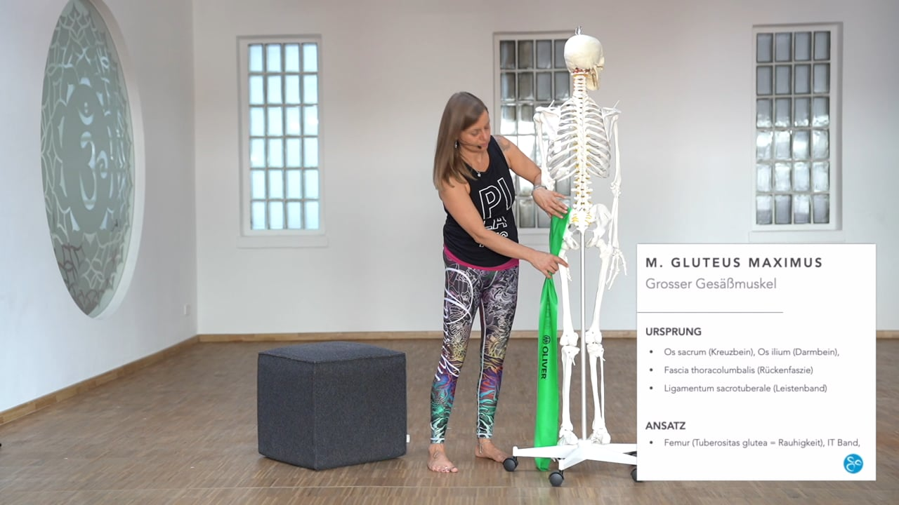 Anatomie 04 Gluteus
