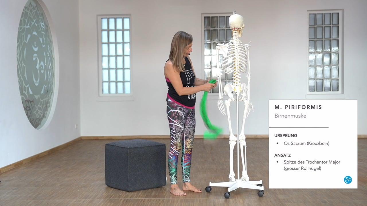 Anatomie 05 Piriformis