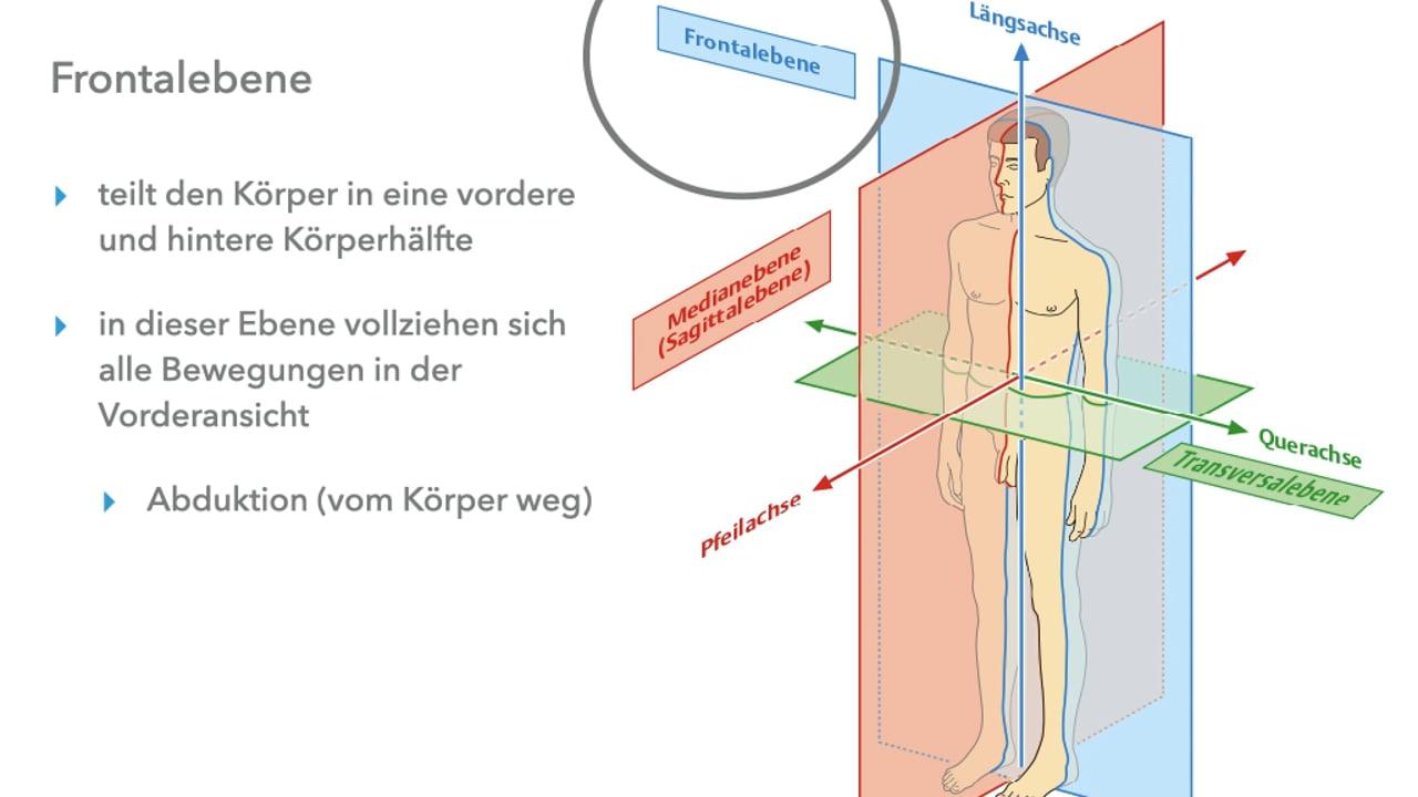 Grundlagen der Anatomie Pilates