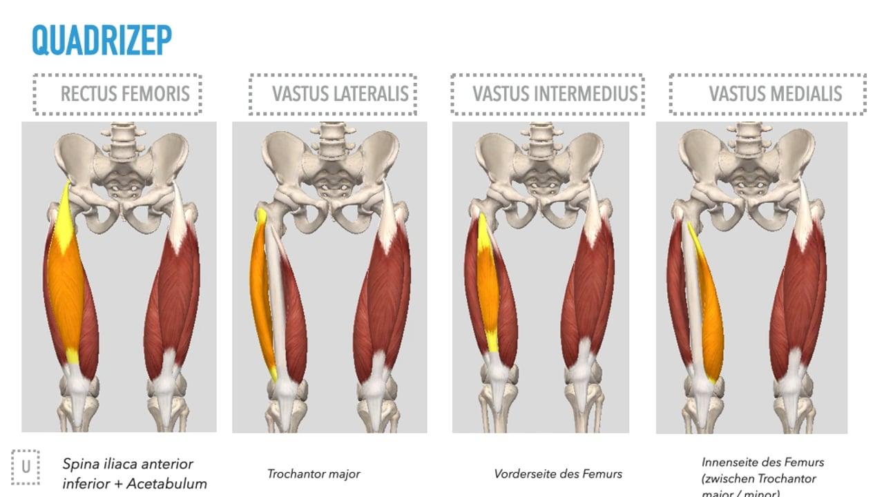 Anatomie Untere Extremitäten