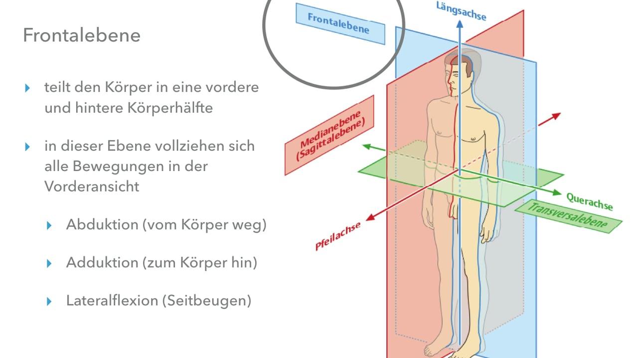 Grundlagen der Anatomie Yoga